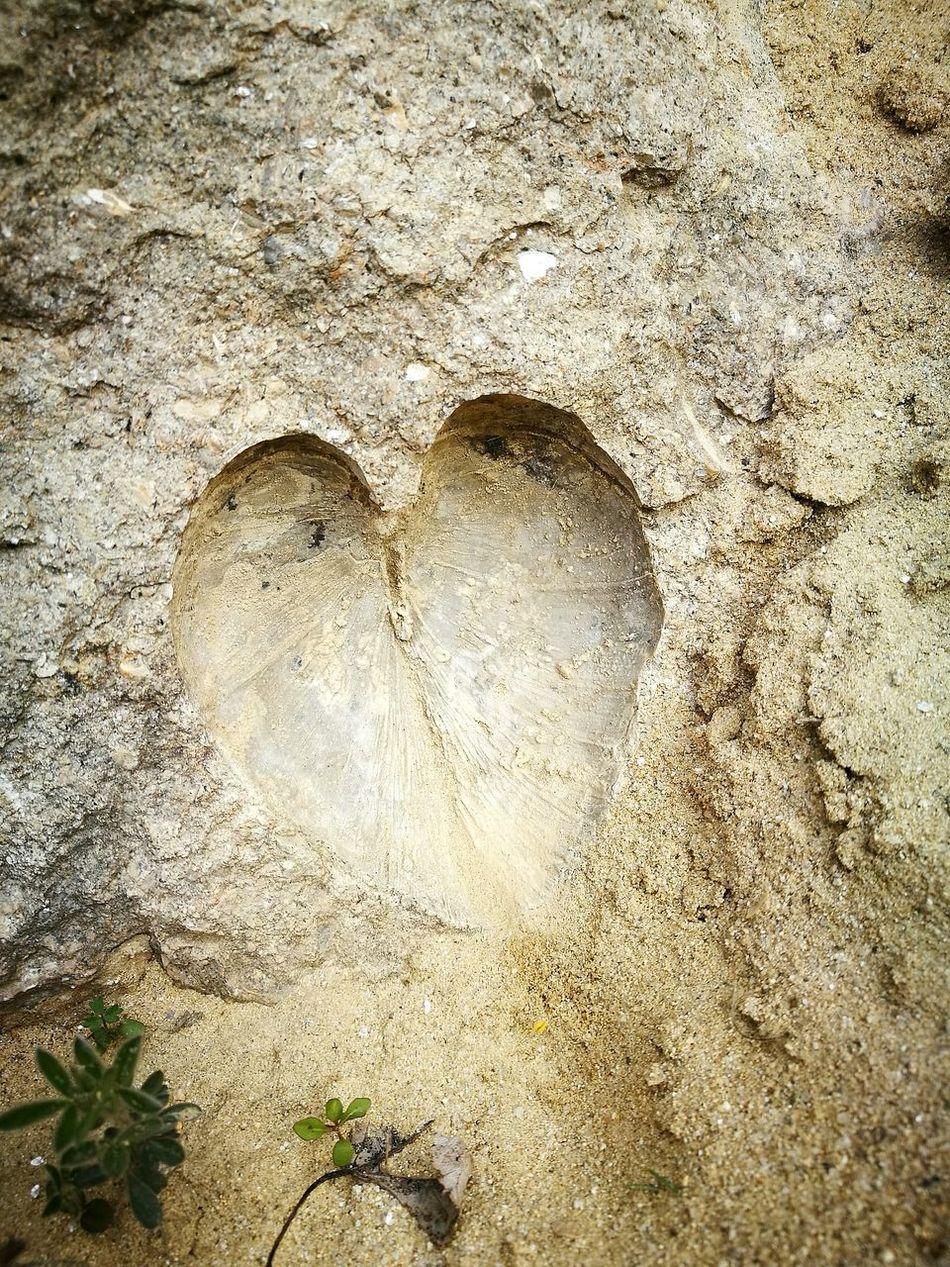 Heart Shape Sand Sandberg Slovakia🇸🇰 Fosill Coral Reef Fosillized Rocks