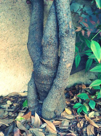 Tronc Natura Plants 🌱 Beauty In Nature Troncs Troncos Jardin Autumn🍁🍁🍁 Nature Naturelovers Nature_perfection Formes Strange Form Strange Forms Of Nature