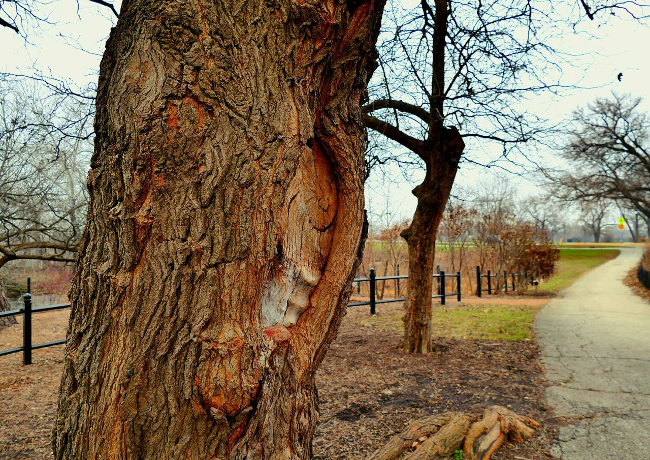 Tree Growth Sky Nature Tree Trunk Outdoors Day Beauty In Nature Branch No People Park Trees Scenics Paths Path