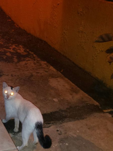 Kanyn Puertorico Gato Cat Cat♡ Catslover Cateyes