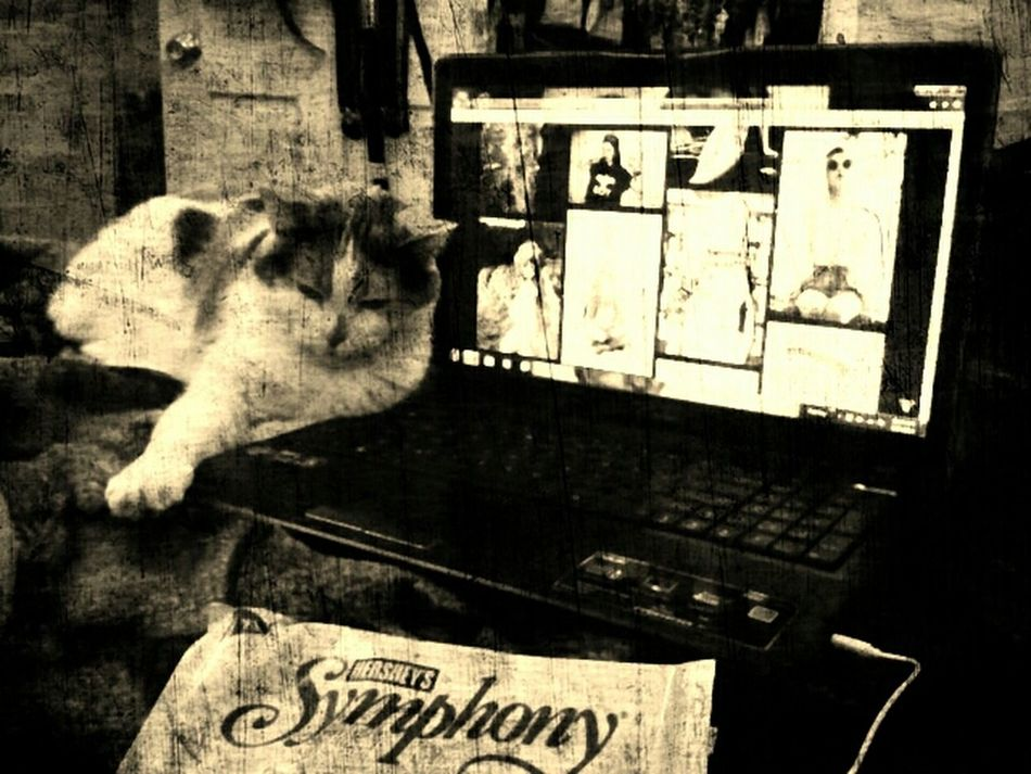  the perf lyf  Cat Chocolate Music Life Tumblr So Cute Perfect Perf OmfG BYE