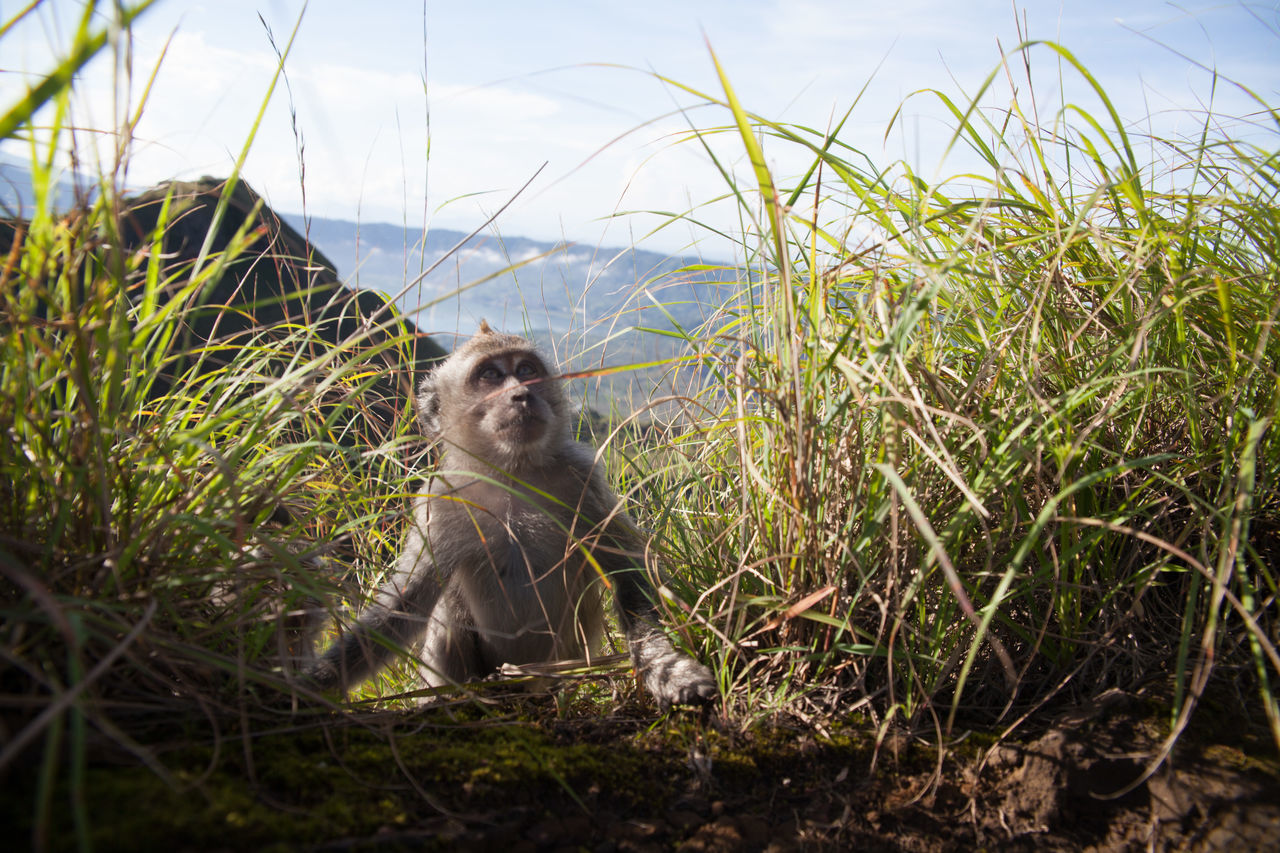 Young Monkey In Mountains