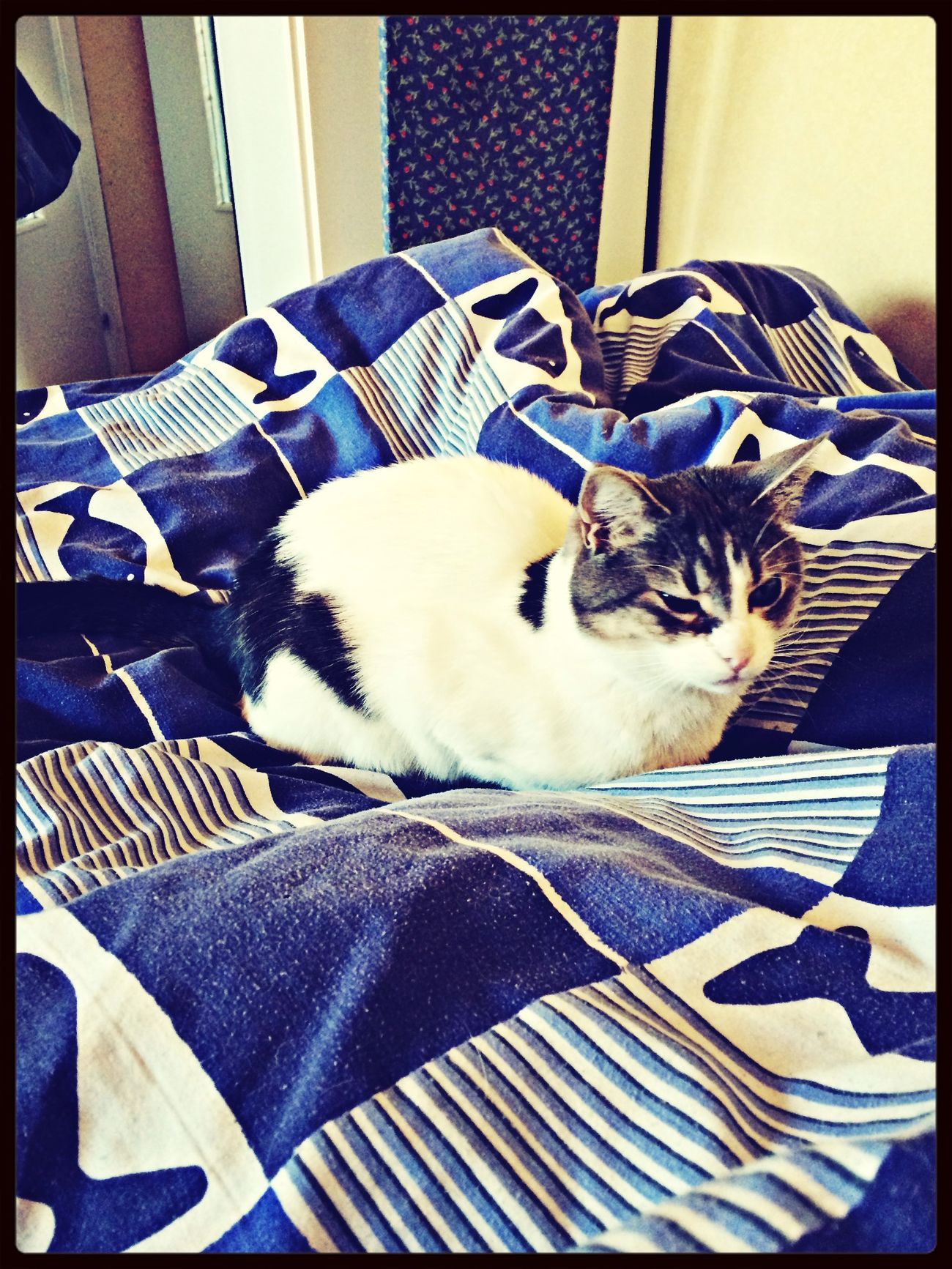 Cats Cat