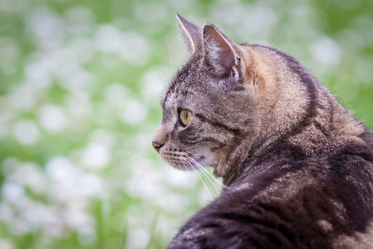 Cute cat. Animal Head  Animal Themes Animals In The Wild Cat Close-up Cut Pets Cute Day Feline Four Legged Friend Looking Away Mammal Nature No People One Animal Outdoors Pets