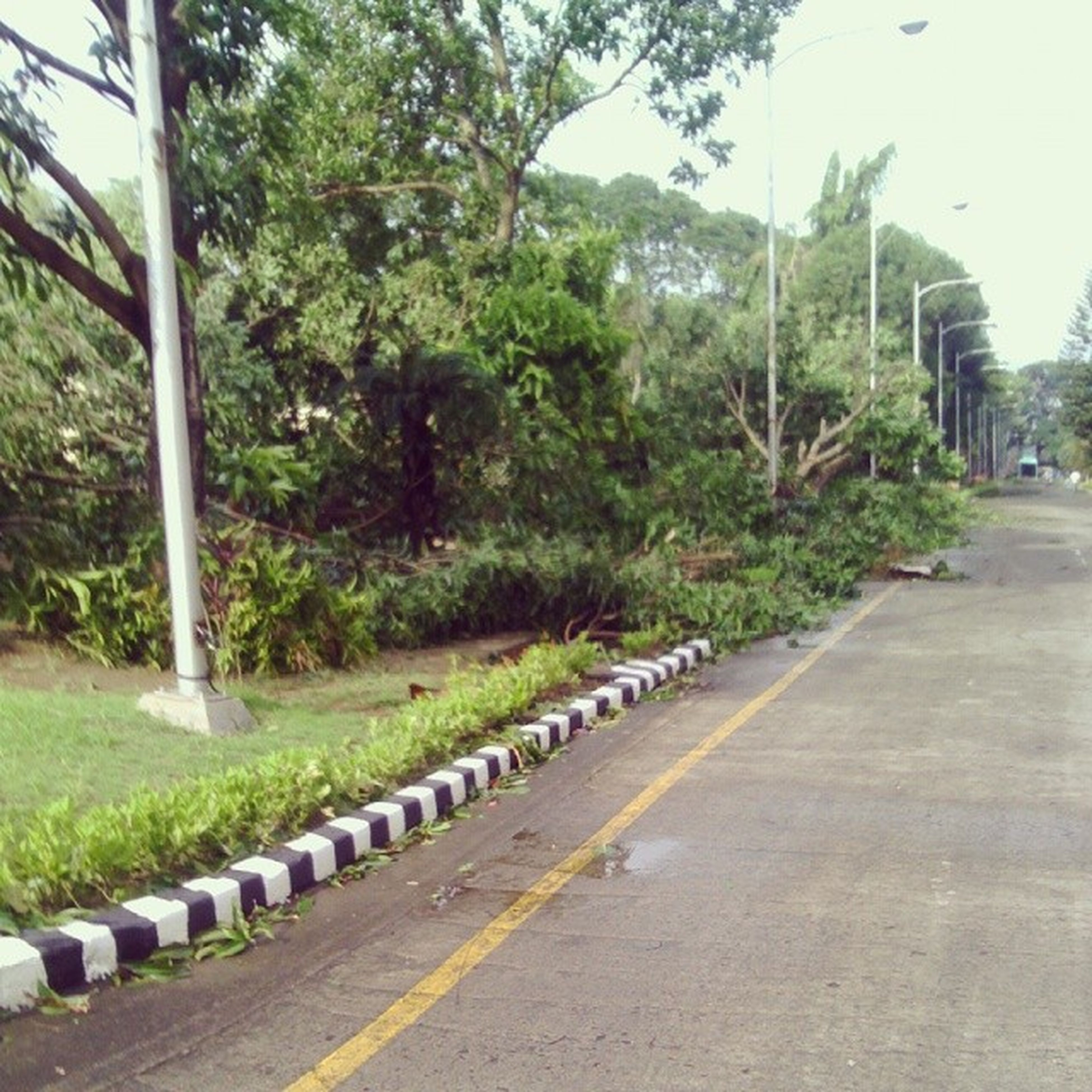 tree, road, the way forward, transportation, street, in a row, green color, diminishing perspective, growth, road marking, treelined, empty road, footpath, day, outdoors, vanishing point, empty, street light, nature, plant