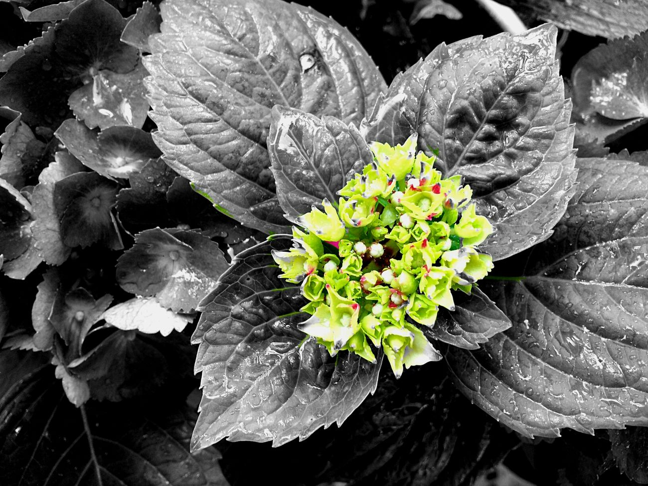 Flowers Blackandwhite Photography Check This Out