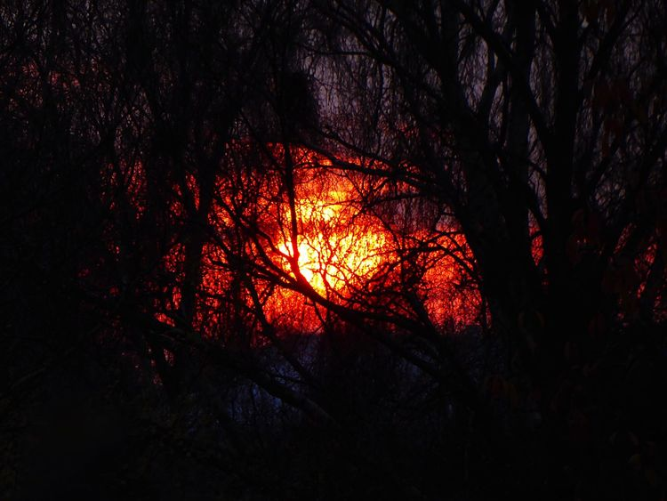 Long Exposure Shot Fire And Flames Fire In The Sky Orange Sky Sunset Silhouettes Silluette Silluettes And Sky Denmark 🇩🇰🇩🇰🇩🇰 Tree Branch Orange Color Beauty In Nature Nature Tranquil Scene Forest Tranquility Sunset Outdoors Scenics No People Silhouette Growth Low Angle View Forest Fire Sky Bare Tree