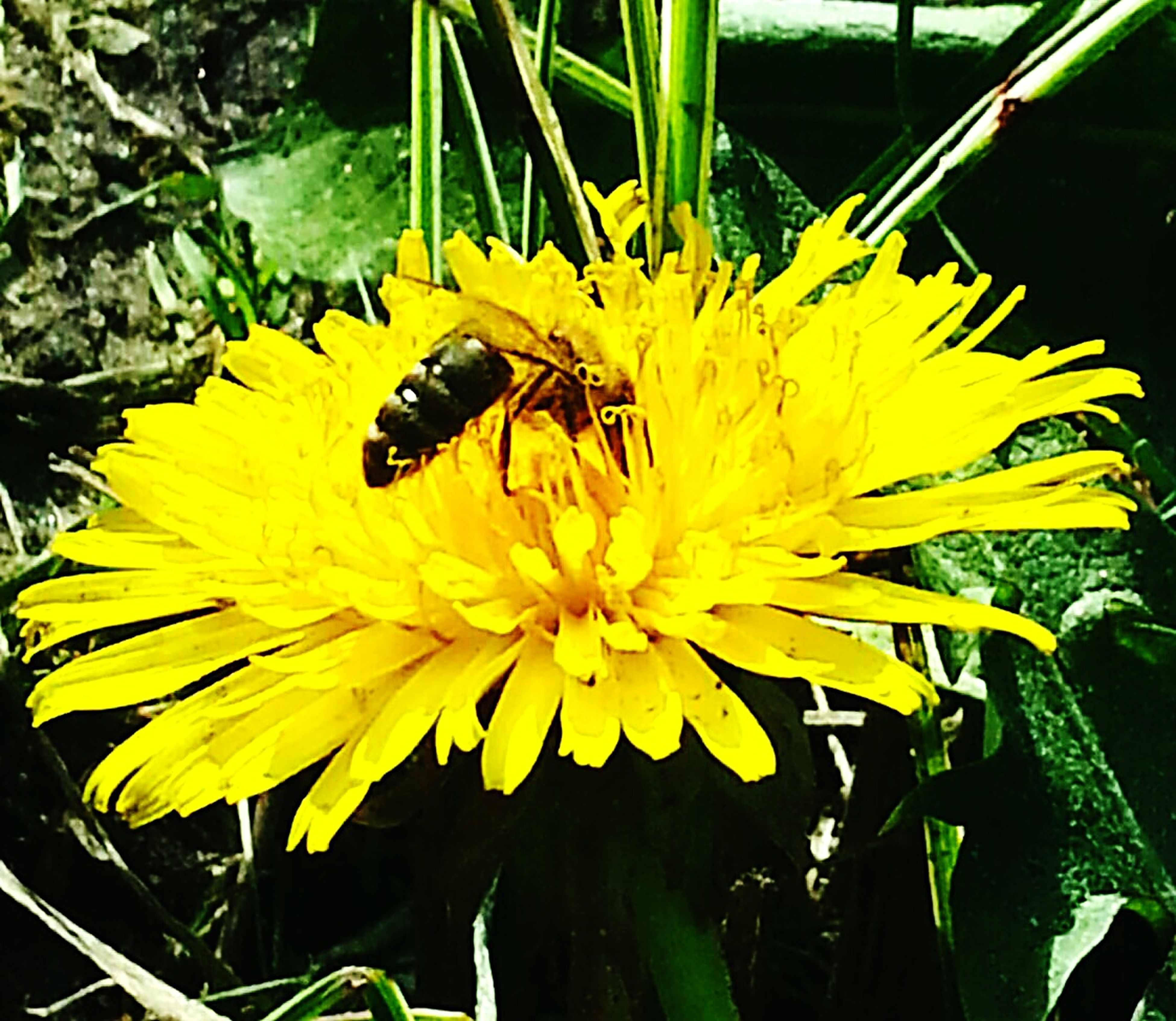 flower, insect, one animal, yellow, petal, animal themes, animals in the wild, wildlife, freshness, flower head, fragility, pollination, bee, beauty in nature, close-up, growth, nature, plant, pollen, high angle view