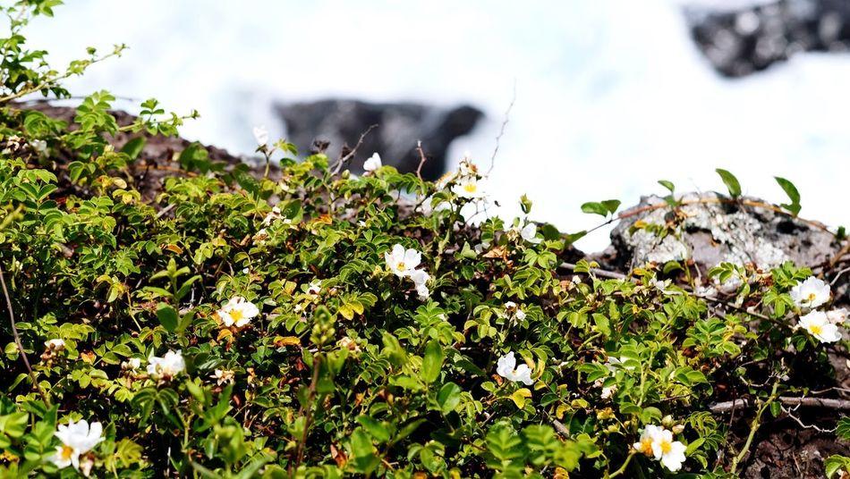 Taking Photos Enjoying Life Flower Collection Flower Head JEJU ISLAND