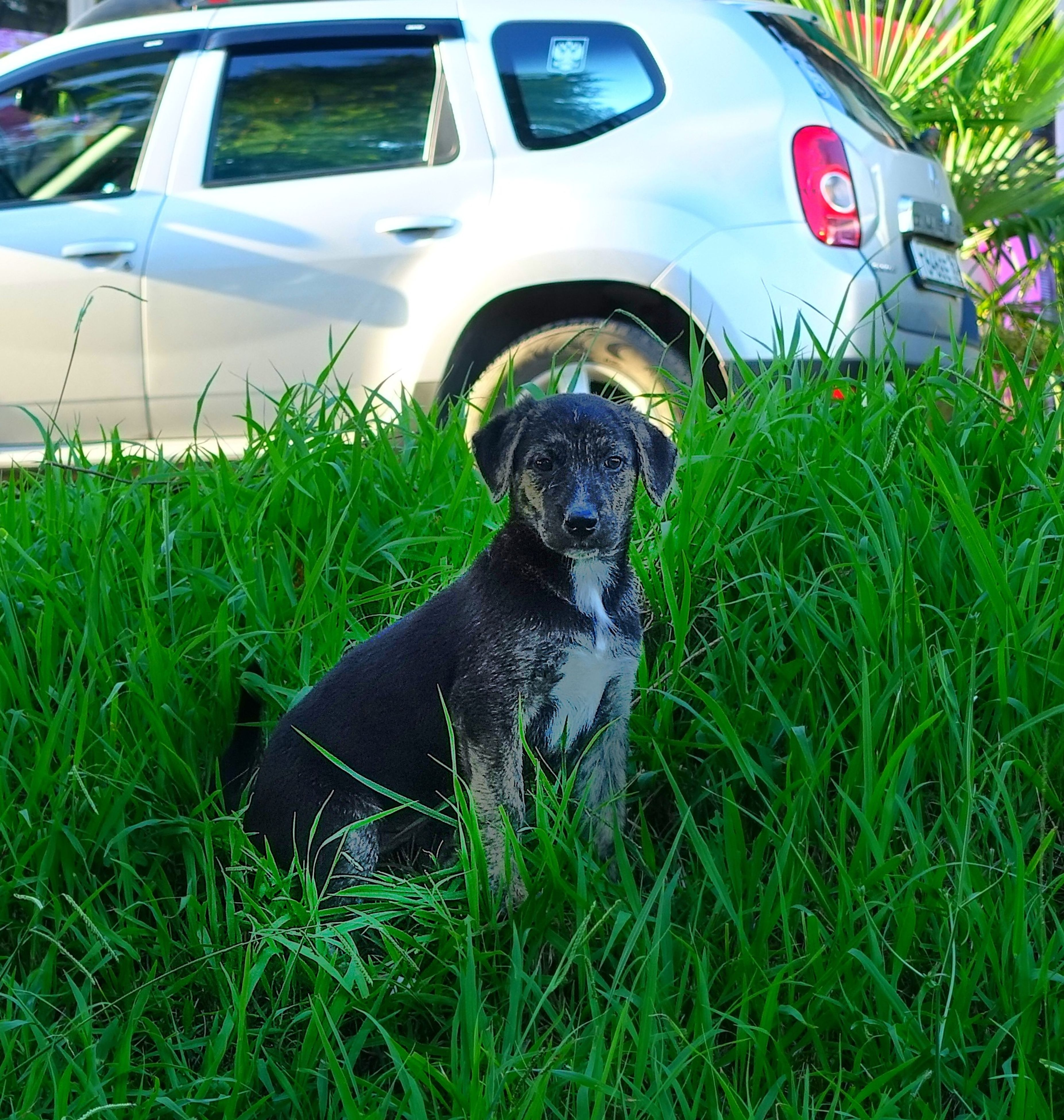 one animal, animal themes, pets, domestic animals, grass, dog, mammal, car, transportation, land vehicle, looking at camera, mode of transport, portrait, green color, plant, black color, field, sitting, grassy, high angle view
