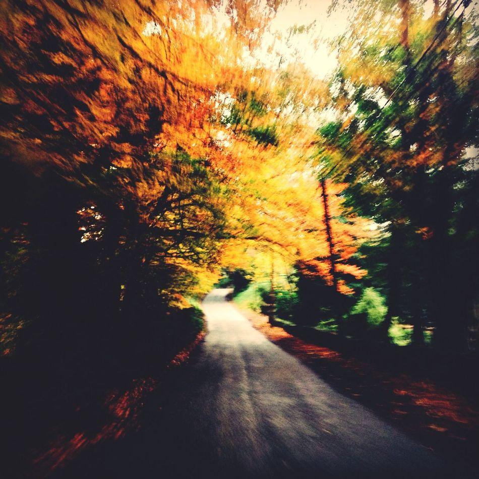 Autumn Colors Of Autumn Escaping