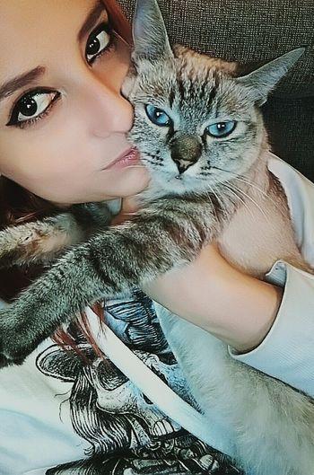 Cats 🐱 Cat Pets Domestic Animals