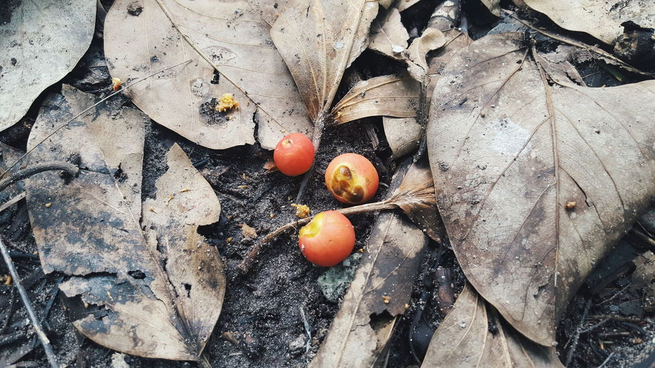 the Fallen Exploringmaldives From My Point Of View Fruits Leaves Ground Forest Sunny Side Of Life Travel Photography Rare Beauty Dead Nature VSCO Food Forest Photography Colour Of Life Showcase July Eyeemphoto Feel The Journey Week On Eyeem in Th.Kinbidhoo