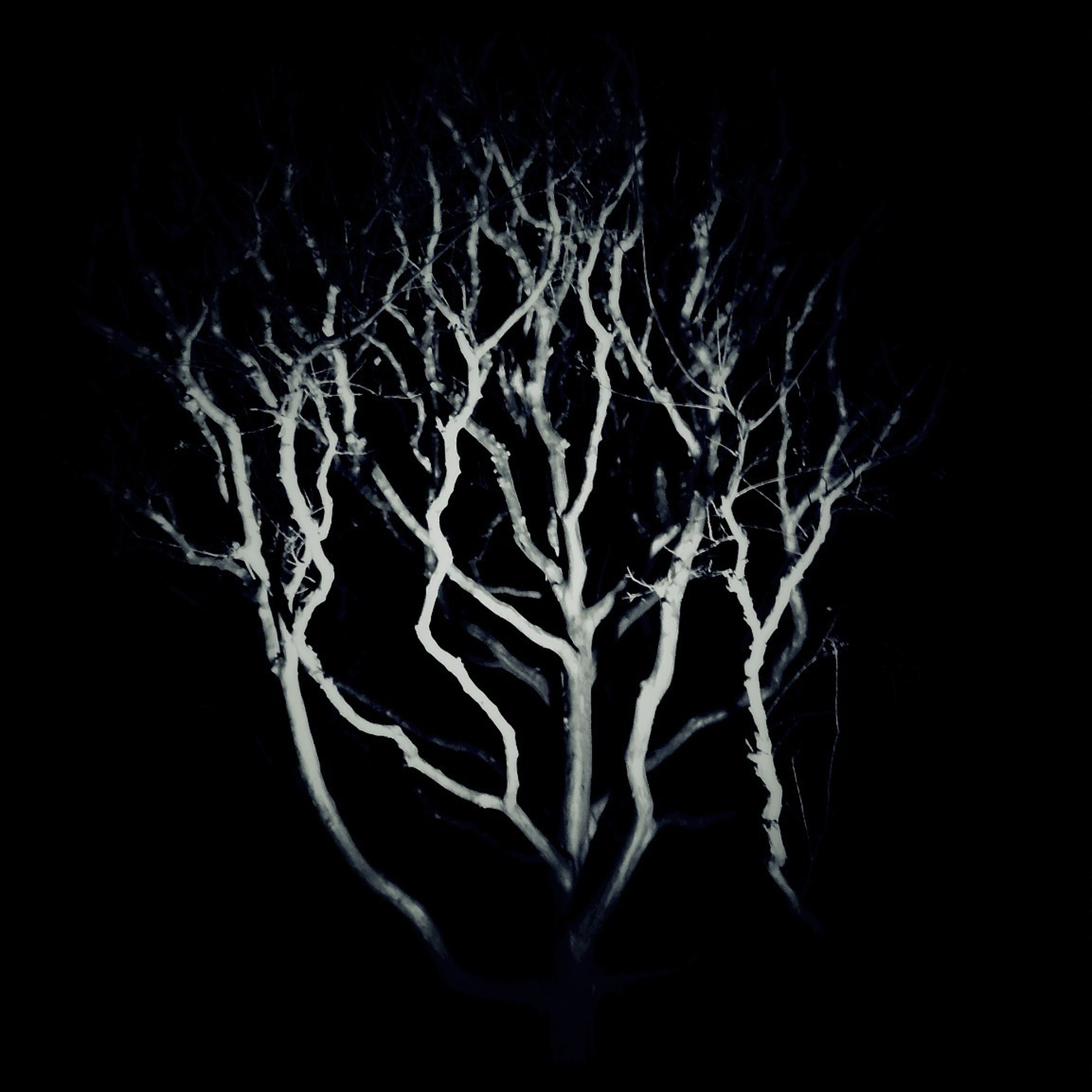 night, dark, black background, studio shot, copy space, spooky, close-up, silhouette, mystery, bare tree, abstract, light - natural phenomenon, nature, outdoors, no people, illuminated, pattern, low angle view, tree, branch