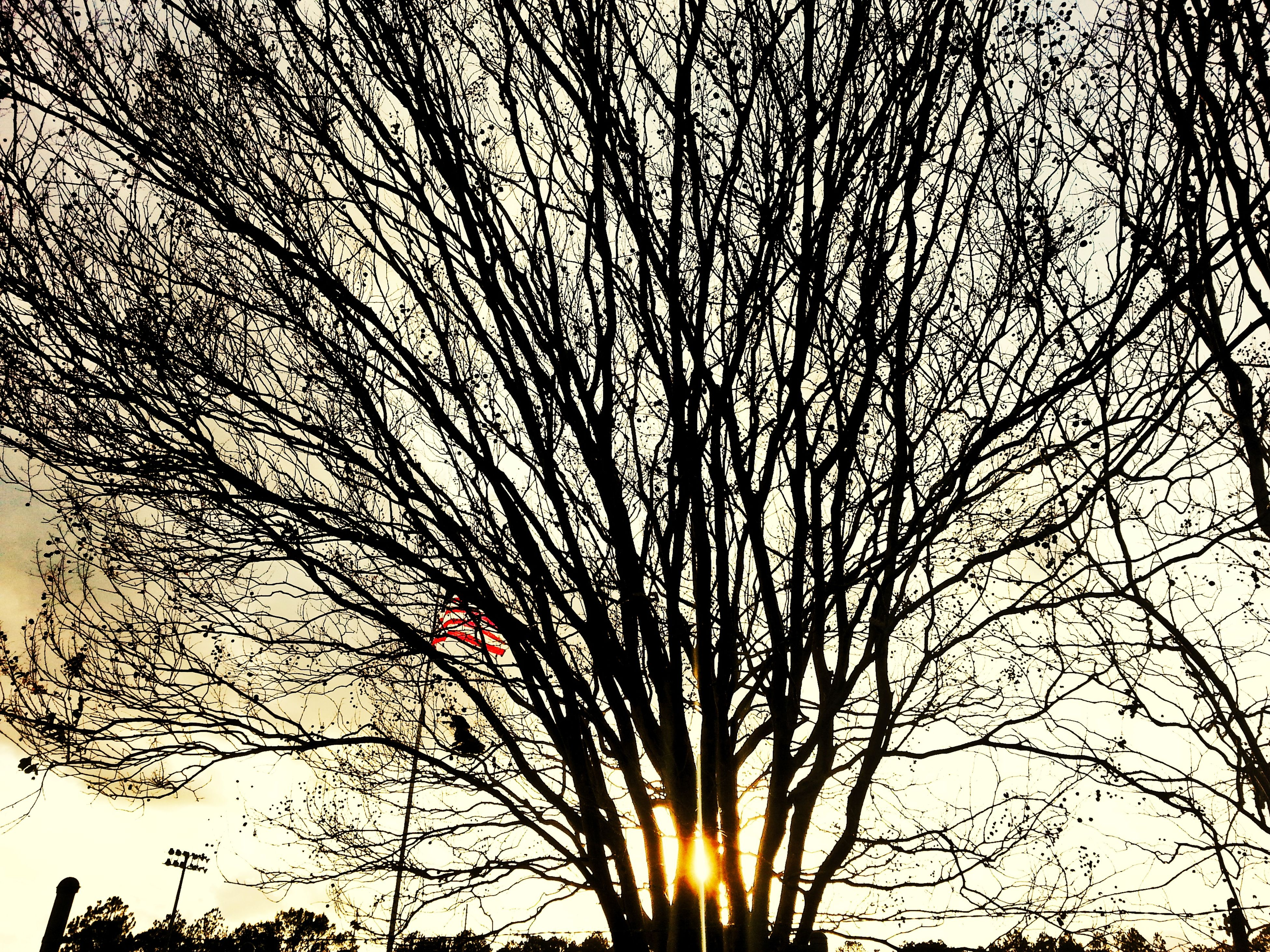 tree, no people, low angle view, growth, sky, sunset, outdoors, nature, beauty in nature, day