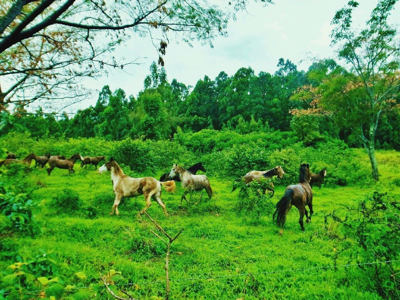 Tree Nature Animal Themes Green Color Grass Outdoors Mammal Beauty In Nature Animals In The Wild Horse Big Island Hawaii