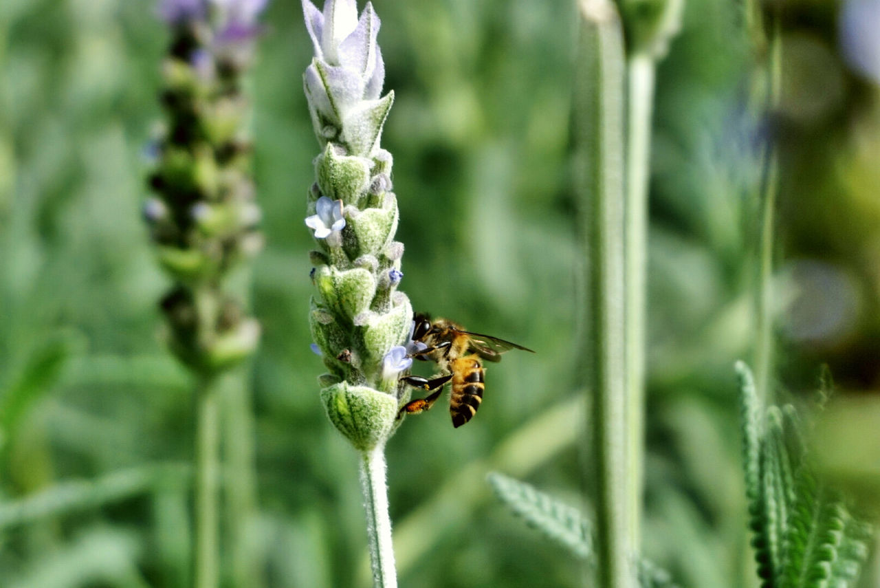 Beautiful stock photos of bee, Animal Themes, Animals In The Wild, Bee, Day