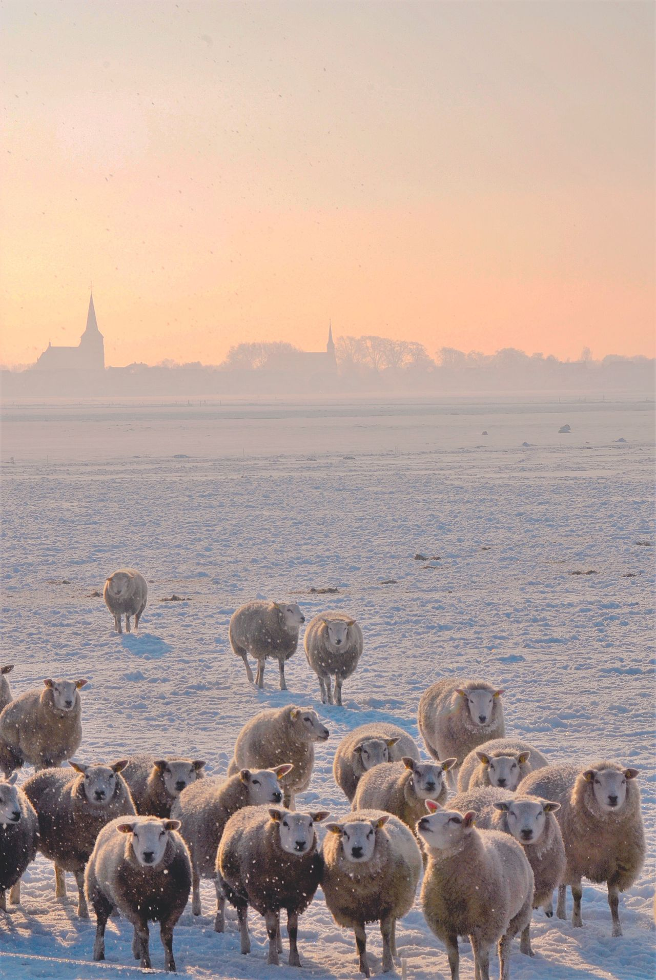 Beautiful stock photos of schaf, Animal Themes, Cold Temperature, Covered, Day
