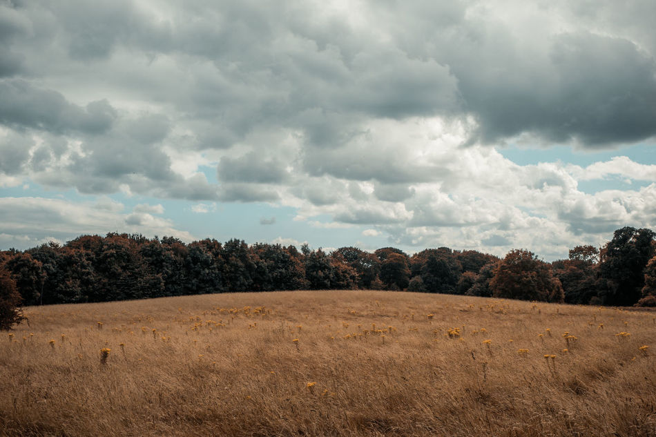 Empty Beauty In Nature Cloud Cloud - Sky Cloudy Day Field Grass Growth Horizon Over Land Idyllic Landscape Nature No People Non Urban Scene Non-urban Scene Outdoors Overcast Plant Remote Scenics Sky Tranquil Scene Tranquility Tree Weather