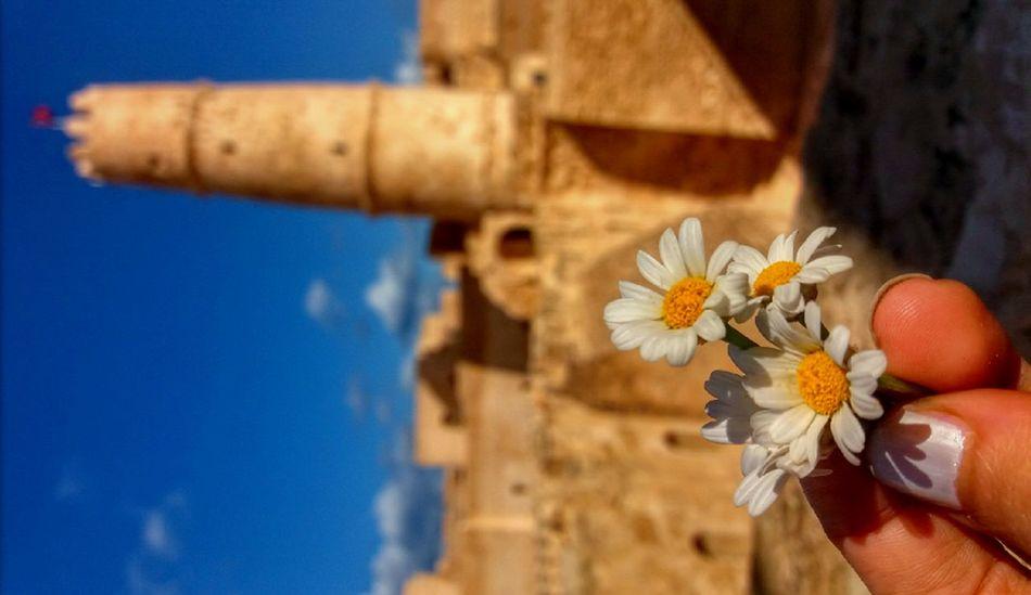 Ribat Oldtown Oldcity Beauty Love To Take Photos ❤ Loveit Nailsoftheday Nail Polish White Flower White Color Tunisia❤ Monastir Tunisie Lovelyday💛
