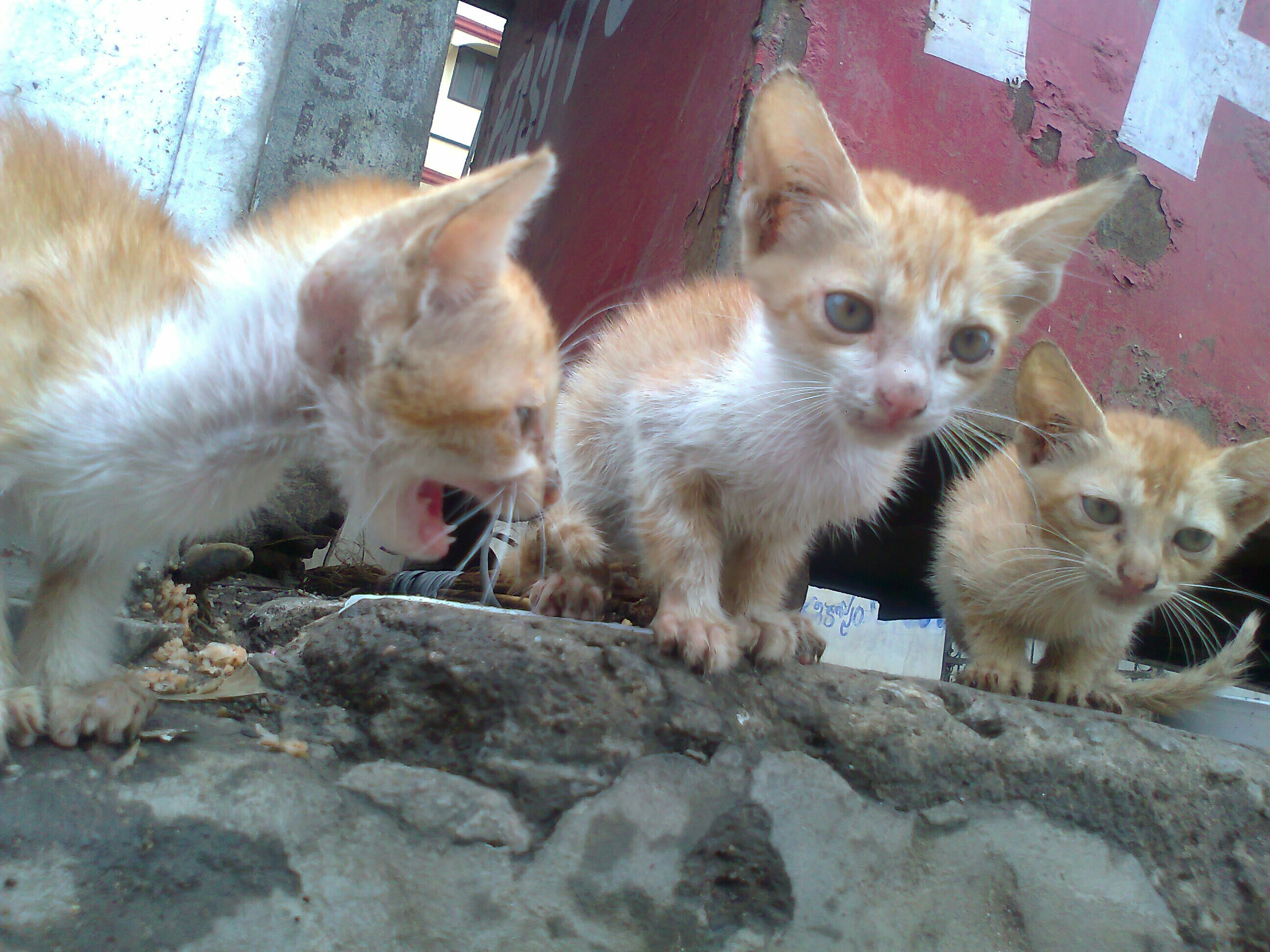 Oprphan pets....... :): Cats Catoftheday Cat Lovers Streetphotography Pets