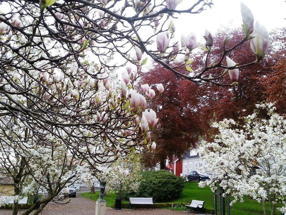City bloom. Flowers Urban Nature
