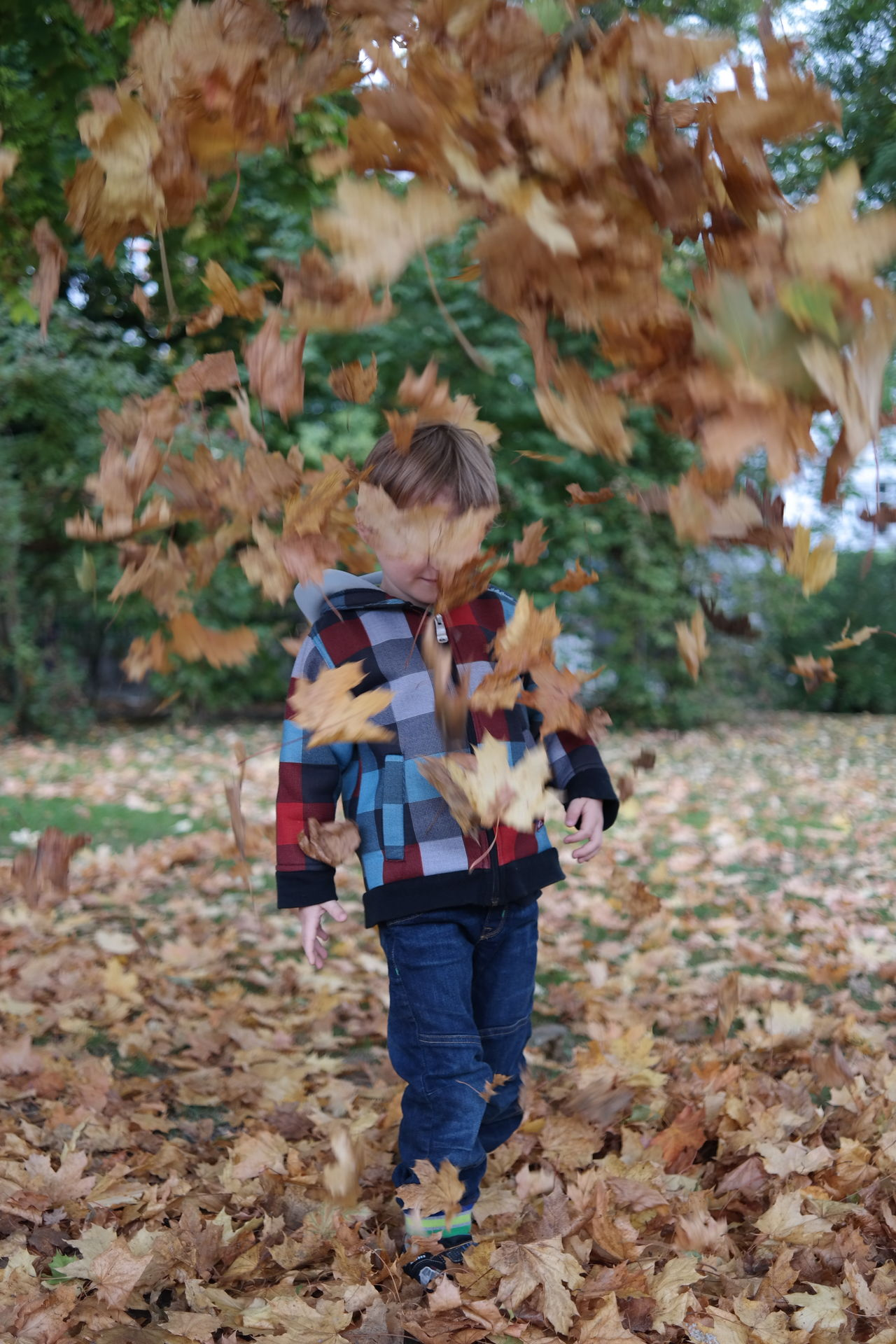 Beautiful stock photos of happy, Autumn, Boys, Casual Clothing, Caucasian Ethnicity