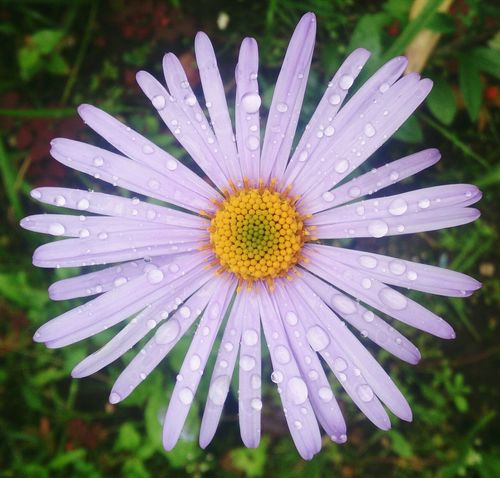 Лето, ах, лето... цветы натюрморт Flowers Still Life Nature No People Close-up Beauty In Nature Petal Freshness вода Water