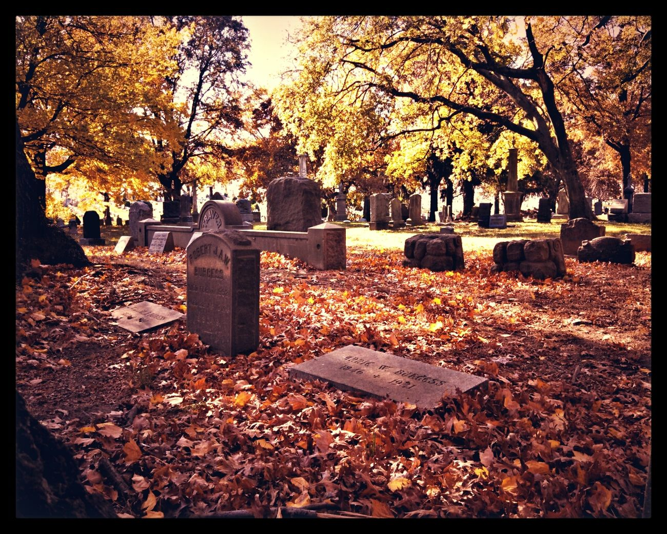 NYC Foliage Cemetery Brooklyn