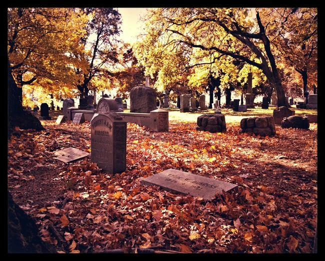NYC Foliage Cemetery Brooklyn