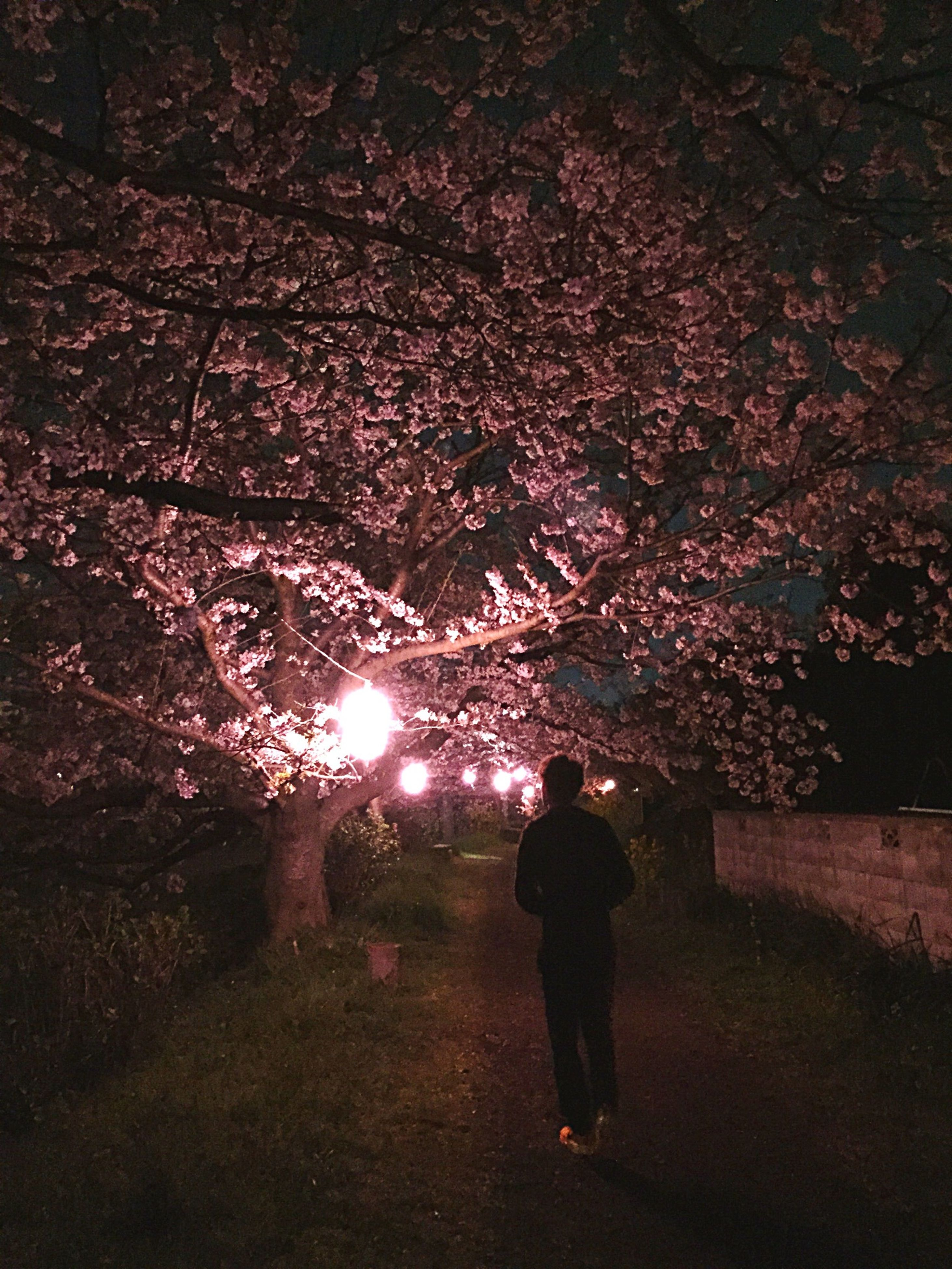 rear view, lifestyles, night, tree, walking, full length, leisure activity, men, standing, illuminated, person, silhouette, outdoors, nature, street, the way forward, sunlight, footpath
