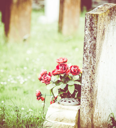 St Marys Churchyard Burial Plot Church Death Grave Launton Solitary St Marys Church Close-up Daiseys Day End Flowers Grass Graves Graveyard Historic Mourn No People Passing Red Roses Stone
