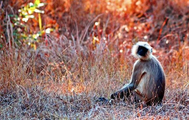 Sony - Pench expedition