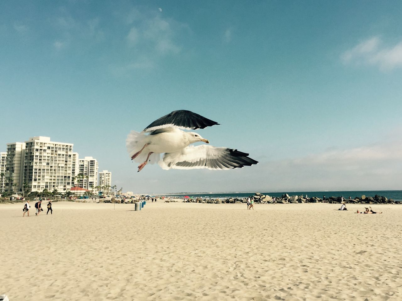 Seagull Air Dancing Seagulls Coronado Beach California Birds Dancing San Diego Summer Coast WestCoast