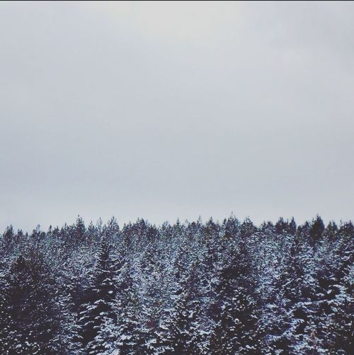 Winter Snow Gray Sky Simple Photography Trees Scenery Forest Snow Covered Escapereality Winter Wonderland Naturelovers Nature Photography Beautiful Simplethings Photography Cold Winter ❄⛄ January2016