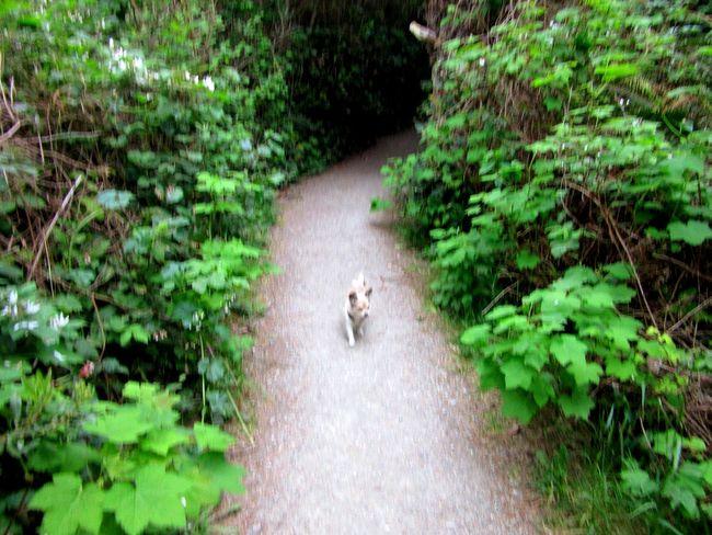 Pathway I Love My Dog Traveler Taking A Walk Solitude A Walk In The Park
