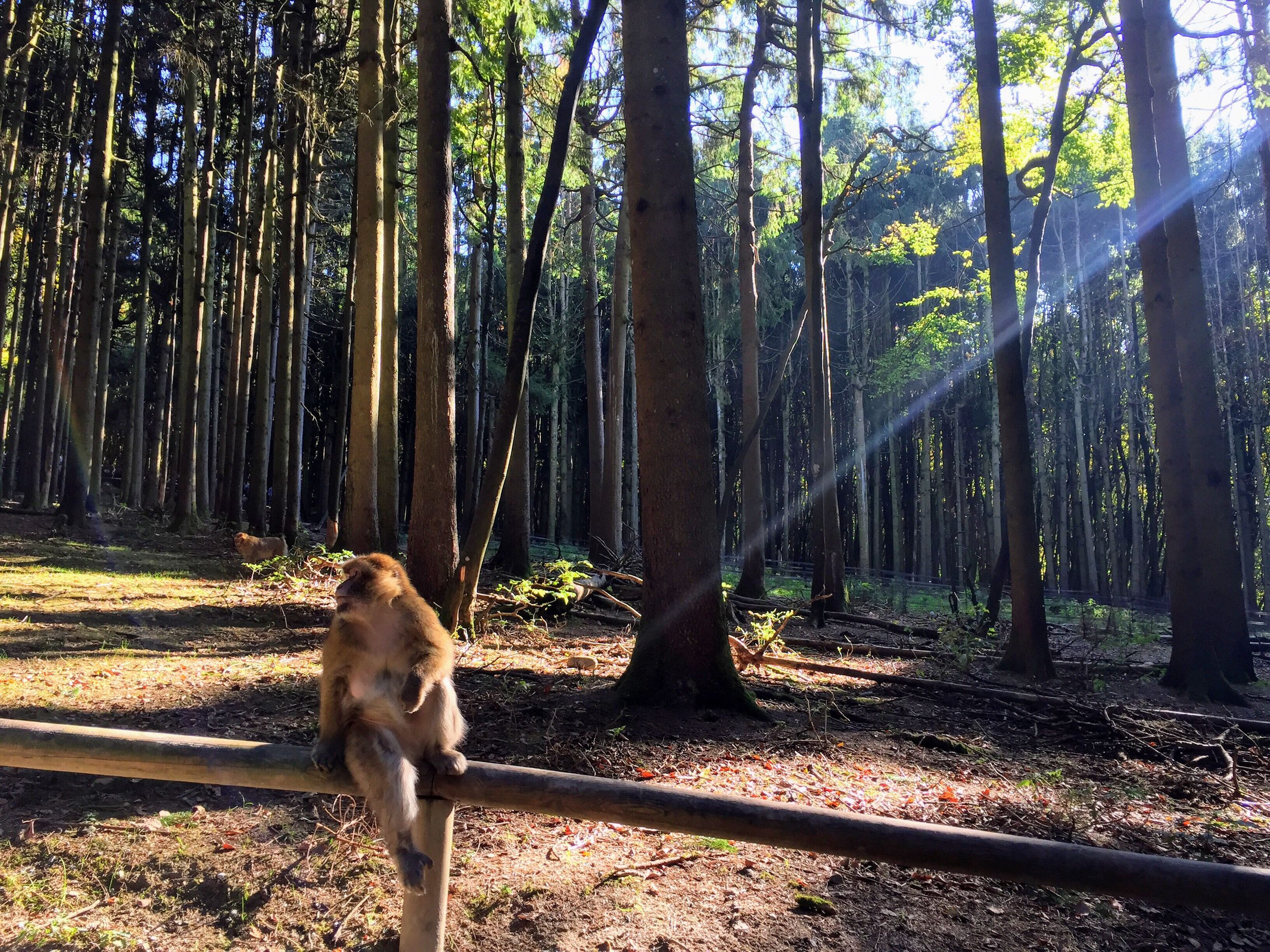 tree, forest, nature, animal themes, one animal, domestic animals, tree trunk, mammal, dog, outdoors, day, no people, growth