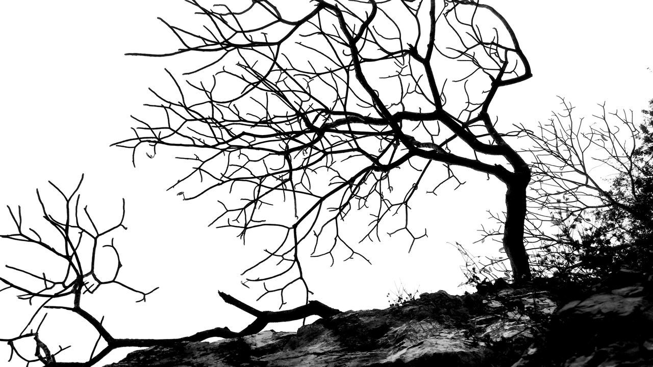 Sky veins Tree Outdoors Sky Silhouette Bare Tree Nature Day Beauty In Nature No People EyeEmNewHere Zihuatanejo Mexico Morning Light Black And White