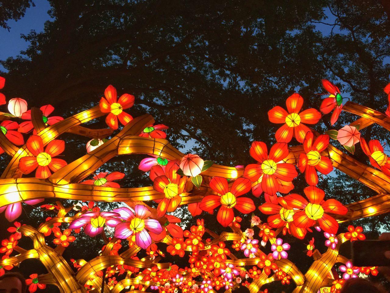 Chinese Lantern Festival Stunning Missouri Botanical Garden Iphoneonly Project 365