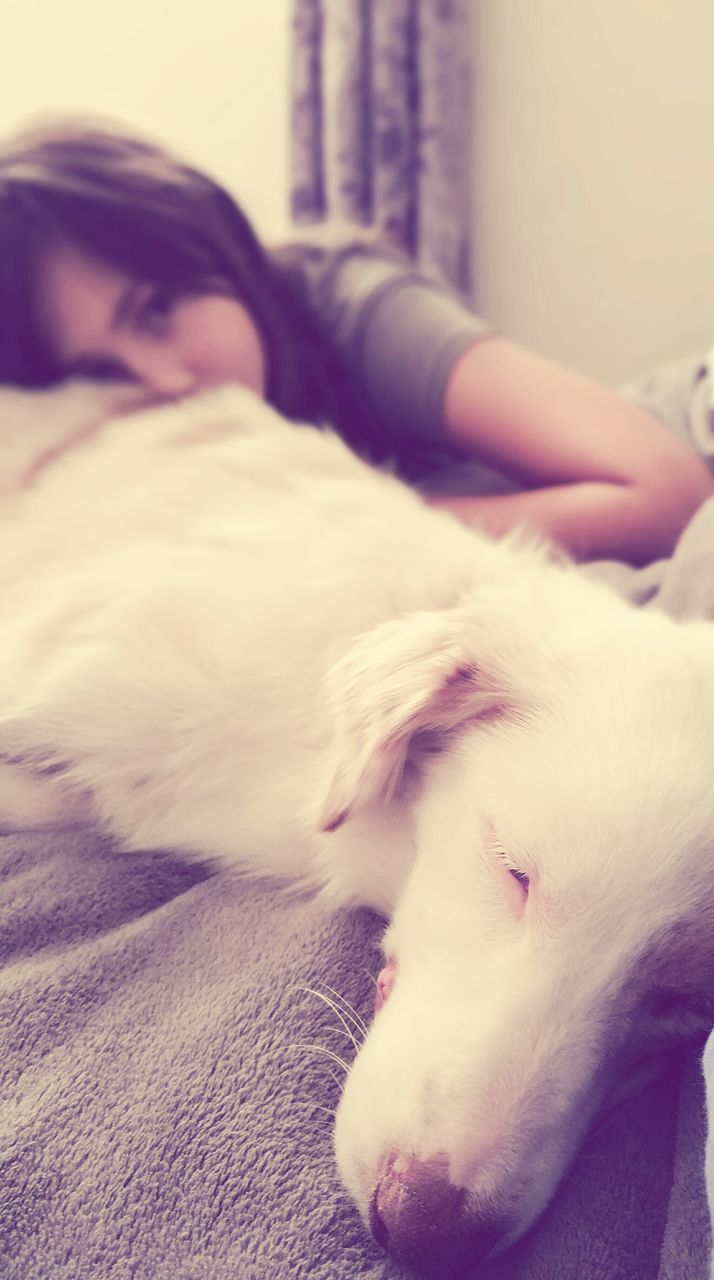 pets, dog, one animal, domestic animals, animal themes, indoors, eyes closed, lying down, sleeping, mammal, relaxation, home interior, bed, close-up, day, one person, young adult, people