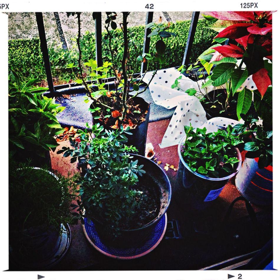 Mi jardín botánico