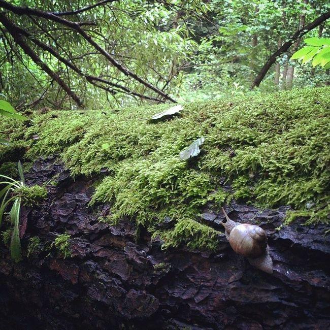 Нстоящий offroad сырец Киев город Syrets forest forest_trip лес дневник_наблюдателя kiev insta_kiev kievblog thekievblog wowkiev kievgram природа nature болото swamp