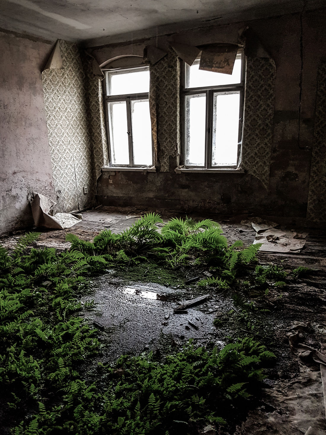Window Indoors  Abandoned Day Architecture Built Structure No People Bad Condition Sunlight EyeEm Gallery EyeEm Best Shots Abandoned Places Abandoned Buildings Windows Urbex The Week On EyeEm Urban Obsolete Forgotten Places  Exploring Green Overgrown And Beautiful Forgotten Places  Light And Shadow Nature