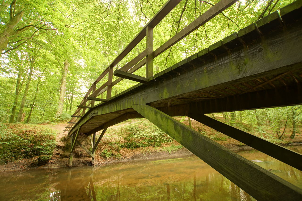 Wooden Bridge in a Danish Forest Architecture Below Bridge - Man Made Structure Brook Built Structure Connection Danish Day Denmark Forest Green Color Jutland Low Angle View Nature No People Outdoors River Sky Stream Sunlight Tree Underneath Water Wood - Material Wooden Bridge
