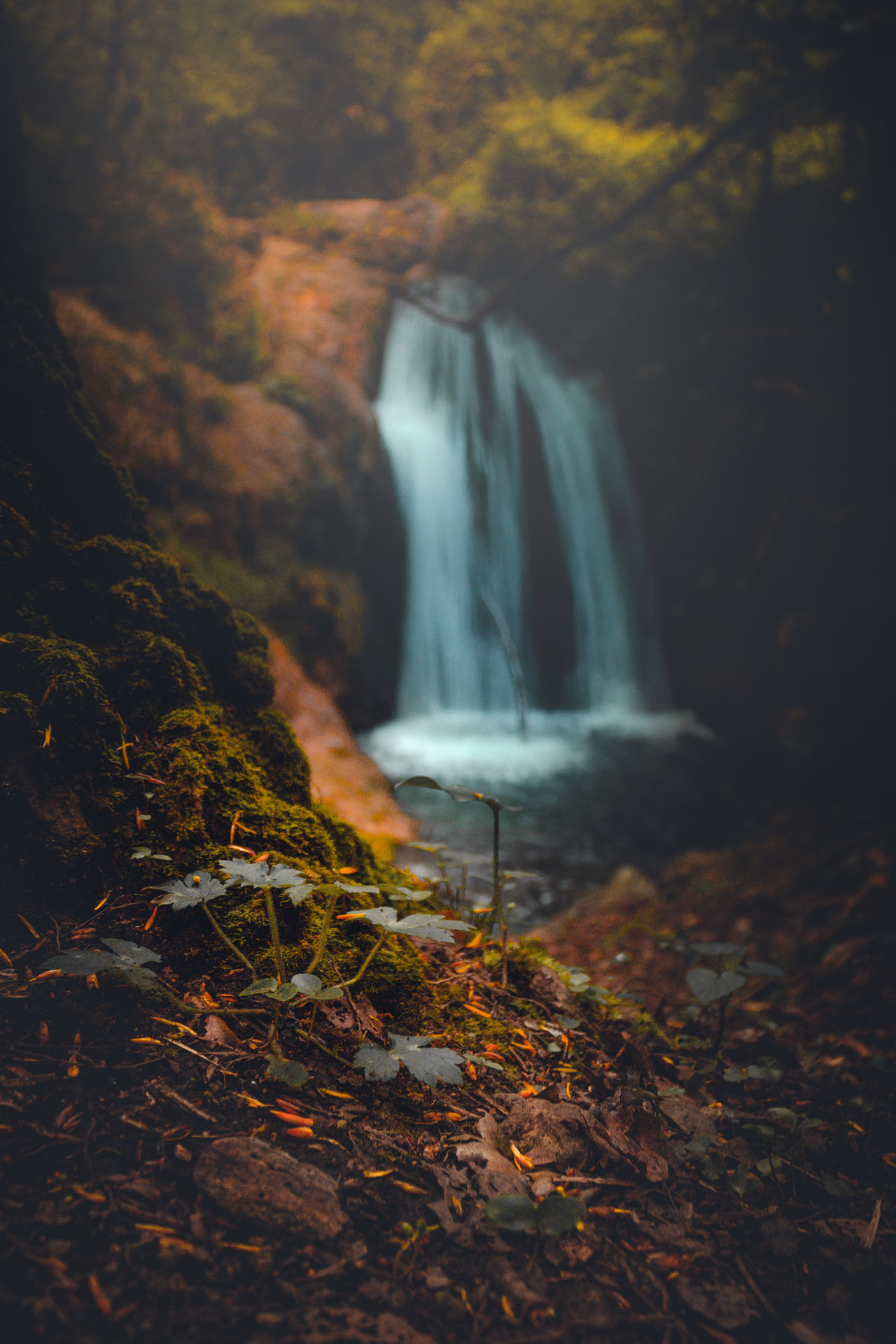 Waterfall Autumn Scenics Leaf Nature Water Long Exposure Beauty In Nature No People Forest Power In Nature Outdoors Day Eye4photography  River Environment Freshness ColorfulPlant Dreamy EyeEm Best Shots EyeEm Travel Eye4photography  Growth The Great Outdoors - 2017 EyeEm Awards