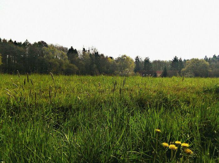 Sommer 🌅 Sommerfeeling Sommer Naturelovers Forrest Green Aufderjagt Spaziergang