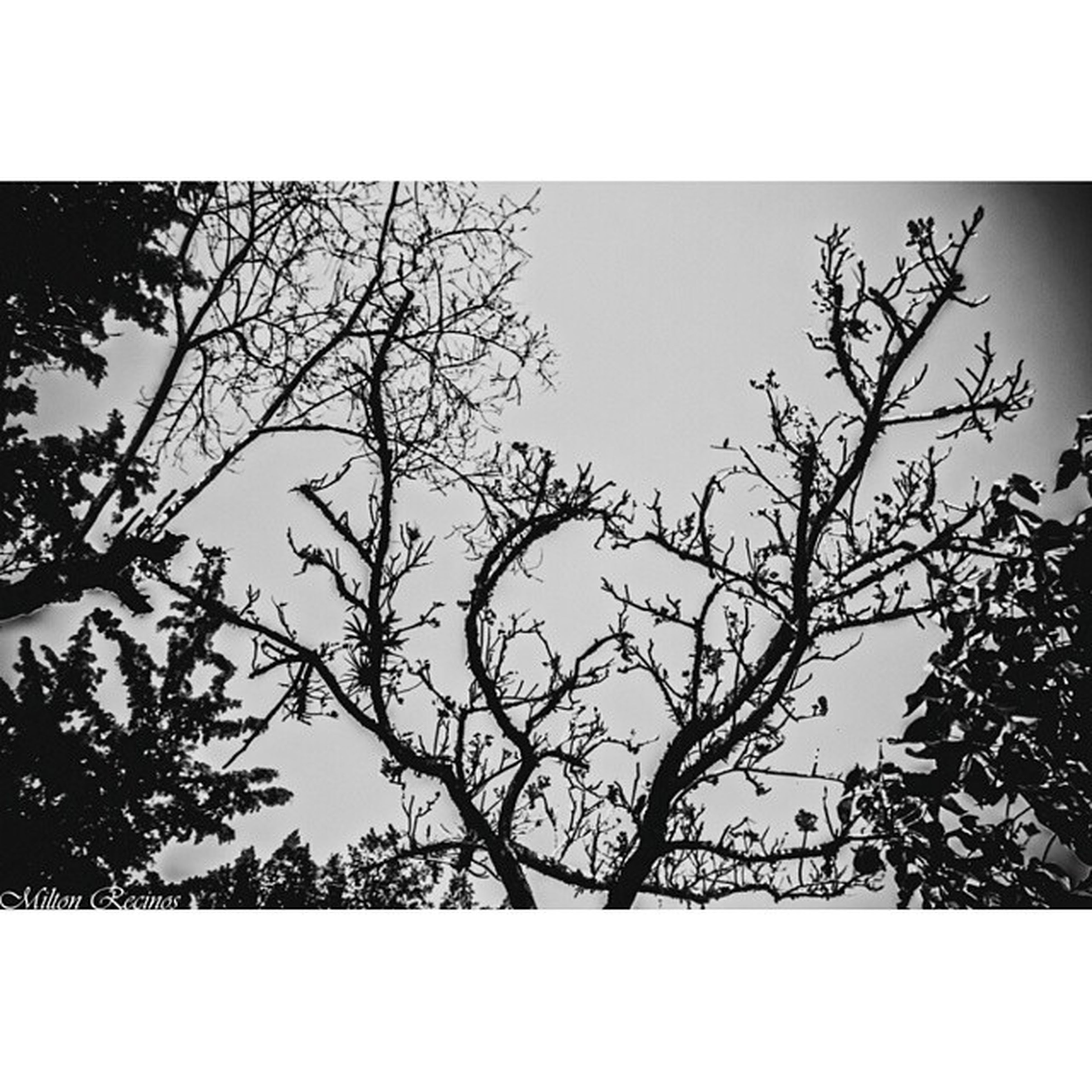transfer print, auto post production filter, branch, tree, low angle view, bare tree, clear sky, nature, sky, silhouette, tranquility, beauty in nature, growth, outdoors, day, no people, scenics, tranquil scene, copy space, frame