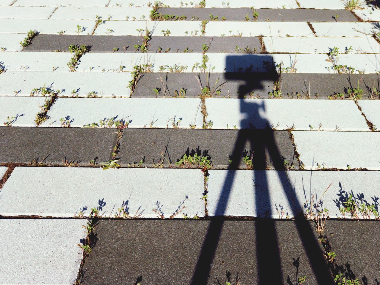 Light And Shadow Sunlight Shadow Streetphotography Street Floortraits Soil Ground Plant Adapted To The City Urban Shadows & Lights Tripod Photographer Environment Plants Backgrounds Background Nature Grass Light Outdoors Architecture Architecture_collection Urban Landscape