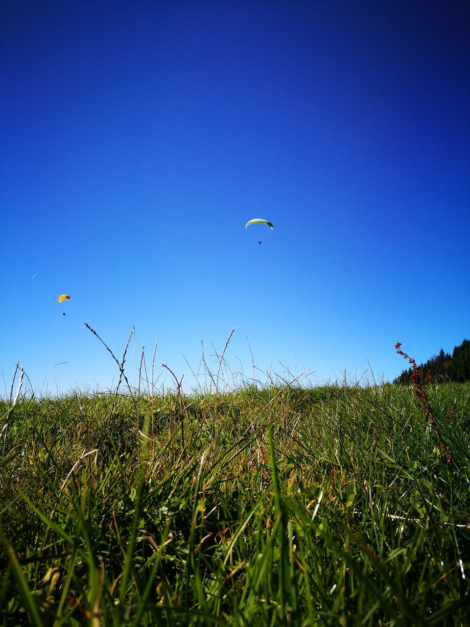 grass, field, nature, blue, parachute, clear sky, landscape, adventure, flying, outdoors, kite, summer, growth, paragliding, beauty in nature, mid-air, day, sky, one person, blue sky, people