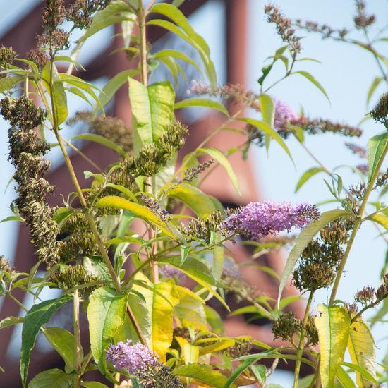 Closeup Wild Herbs Zeche Zollverein